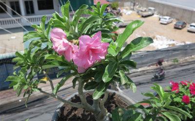 Tropical terrace plant profiles